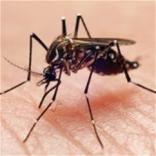 Что вы знаете о комарах на самом деле?